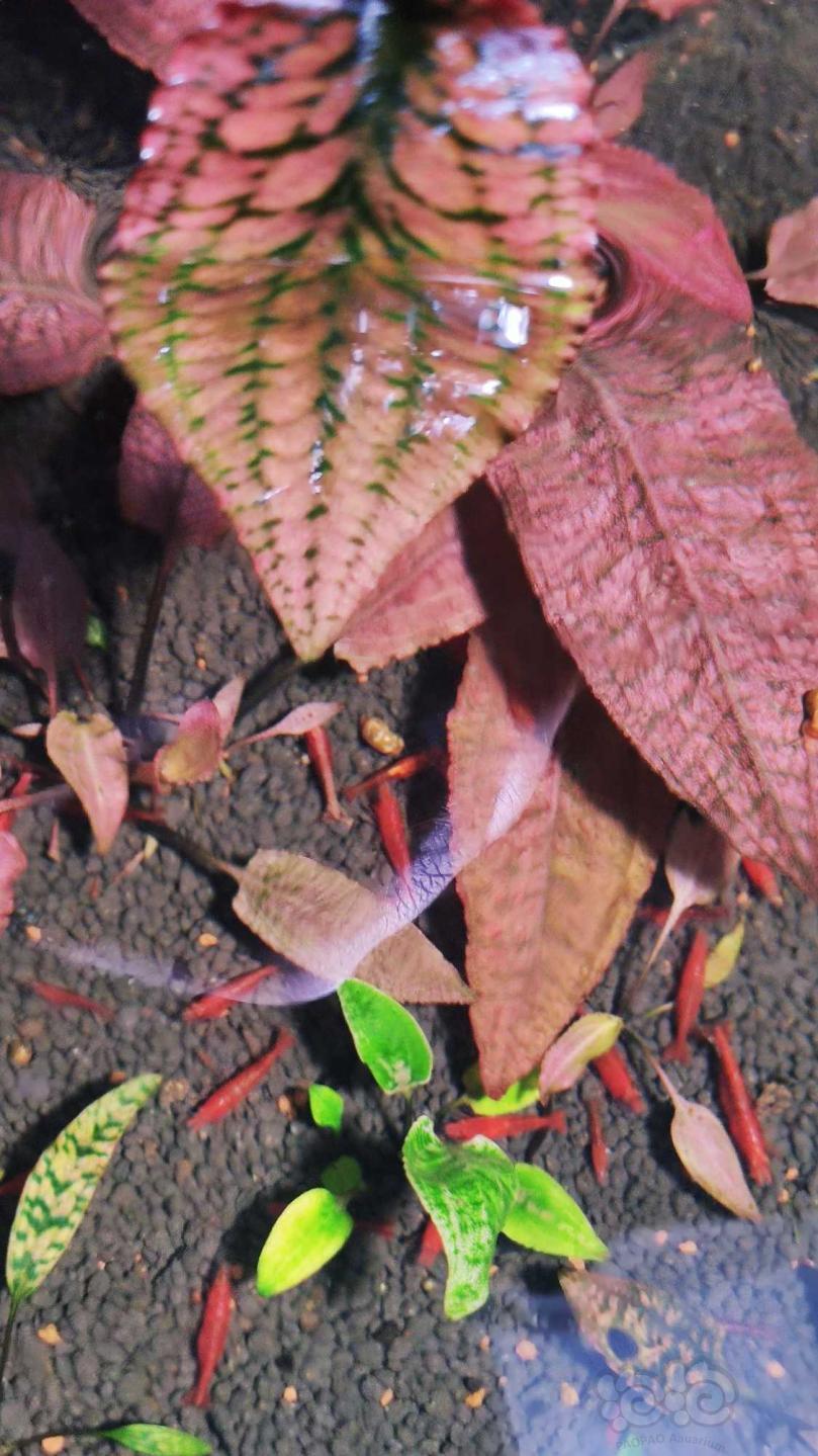 深红盛翠过年就要红红火火-图3