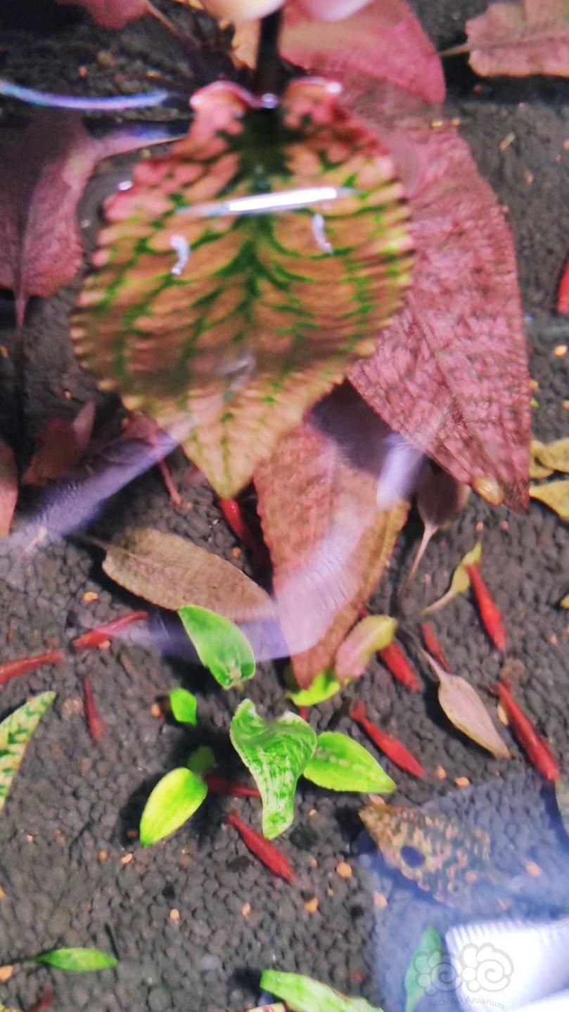 深红盛翠过年就要红红火火-图2