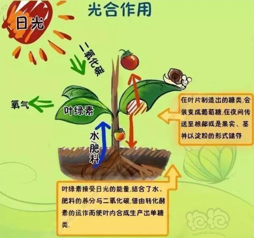 【交流】水草缸-二氧化碳重要性【浅谈篇】慎入,文字有點多-图1