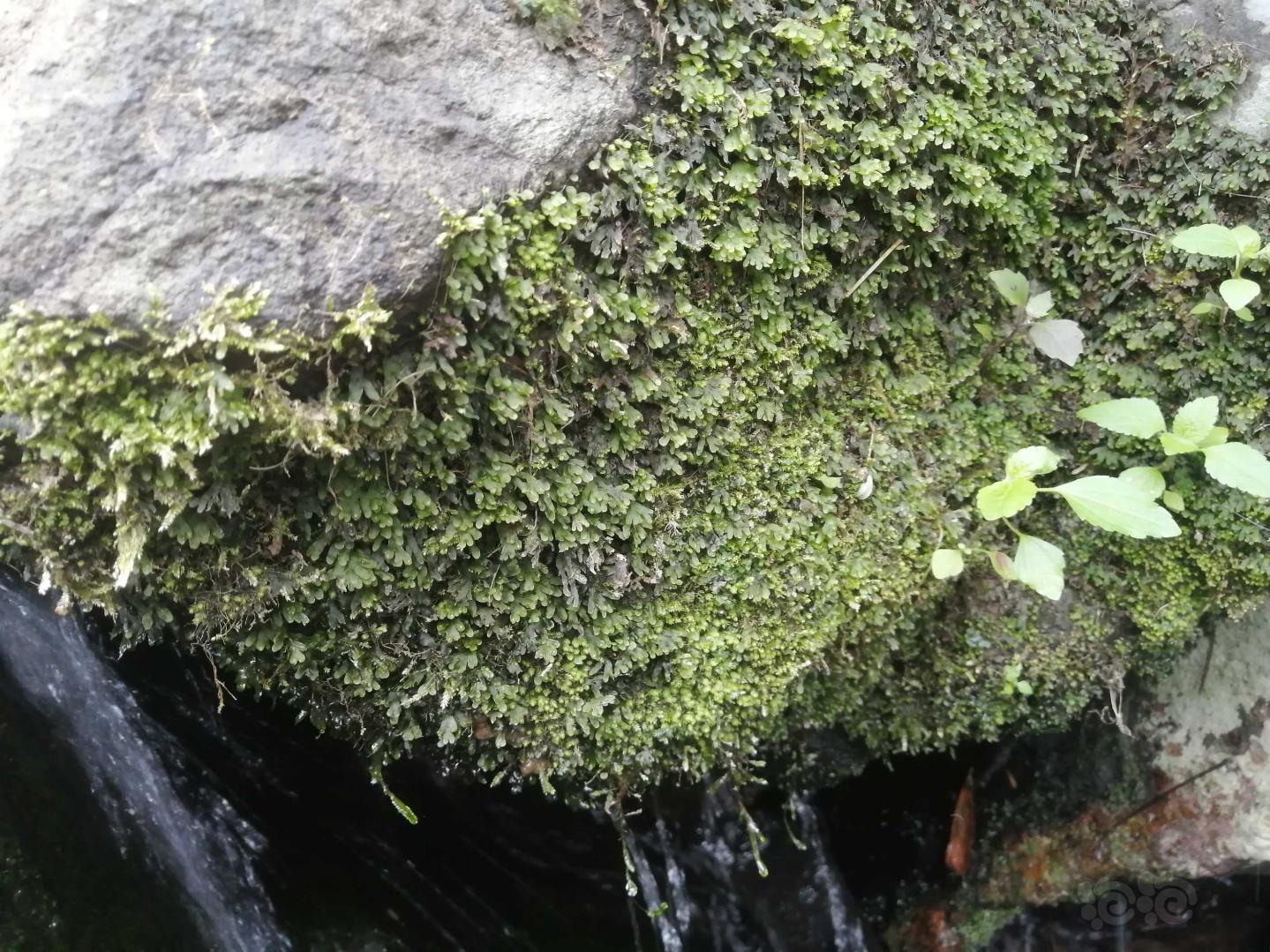 家附近的小溪流,野采。-图4