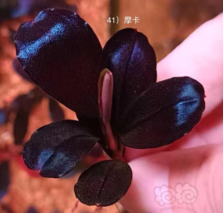 盘点最近几年的网红辣椒榕-图1