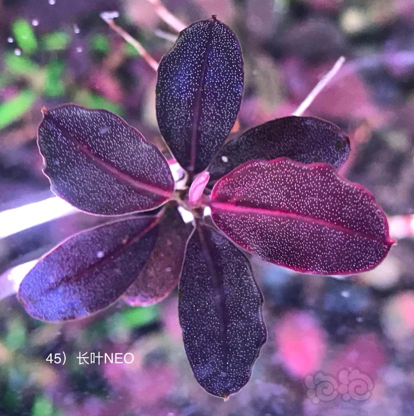 盘点最近几年的网红辣椒榕-图7