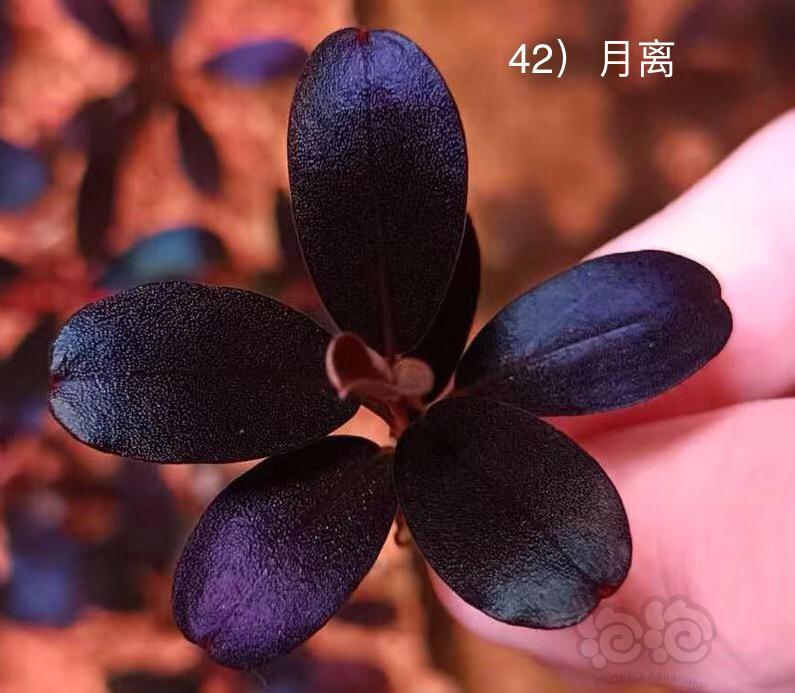 盘点最近几年的网红辣椒榕-图4